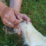 Akupunktur für Hunde