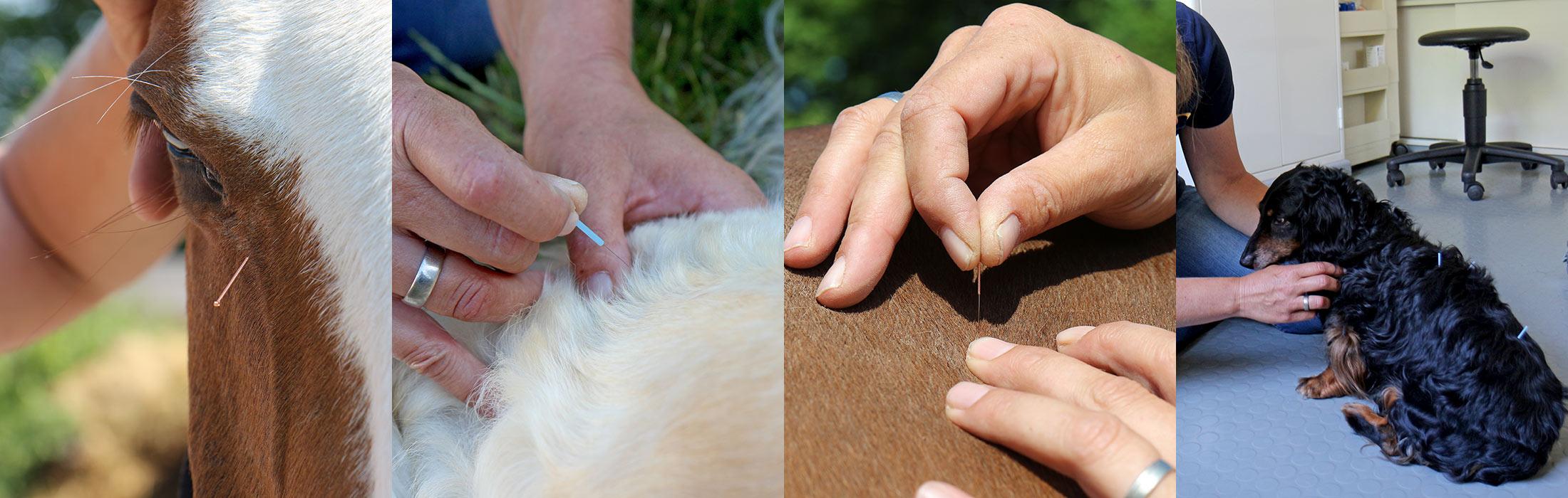 Akupunktur für Pferde und Hunde