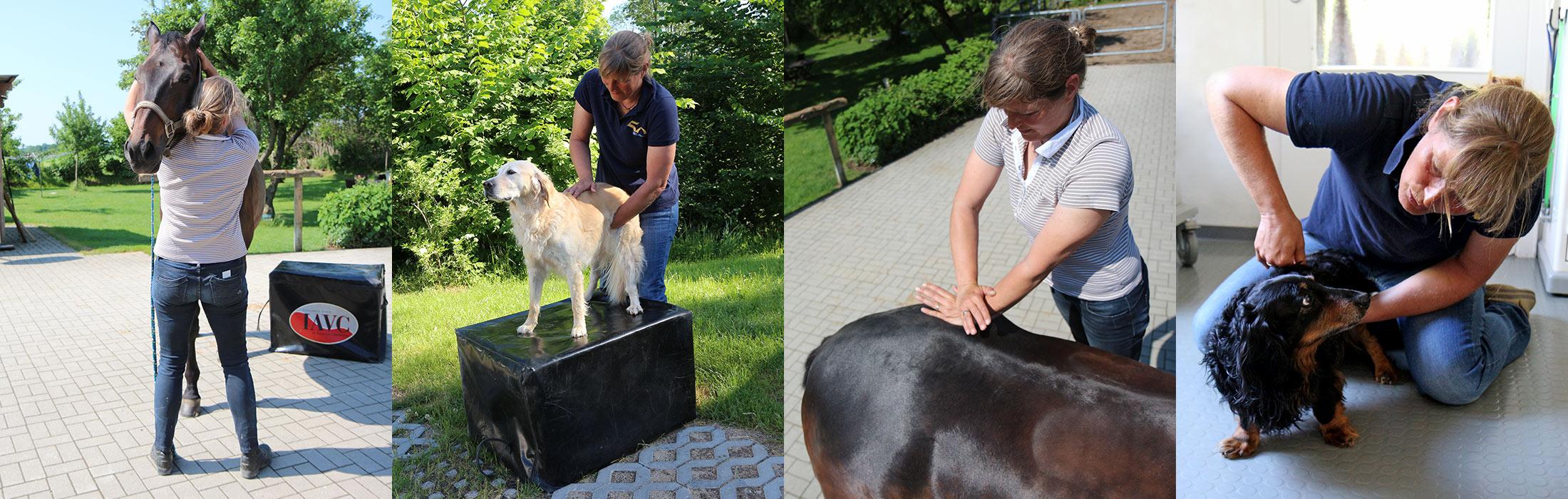 Chiropraktik für Pferde und Hunde
