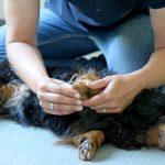 Chiropraxis für Hunde
