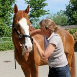 Chiropraxis für Pferde